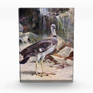 Dibujo del pájaro del chillón con cresta