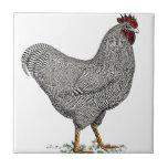 Dibujo del pollo de Plymouth Rock Azulejos