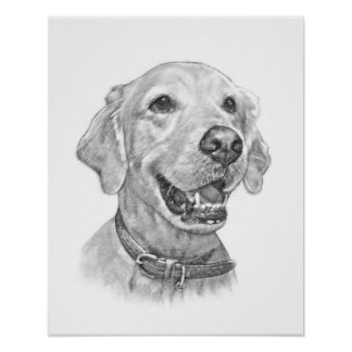 Dibujo del retrato del mascota del golden retrieve posters