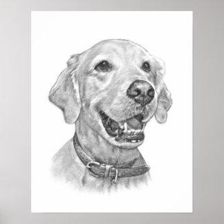 Dibujo del retrato del mascota del golden retrieve póster