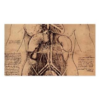 Dibujo del torso de una mujer de Leonardo da Vinci Tarjeta De Visita