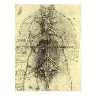 Dibujo del torso de una mujer de Leonardo da Vinci Tarjeta Postal