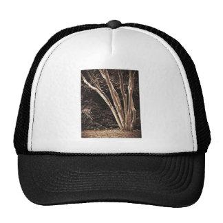 Dibujo del tronco de árbol gorros
