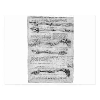 Dibujo del vintage de la estructura del brazo tarjetas postales