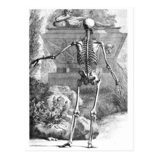Dibujo del vintage de un esqueleto posterior del tarjetas postales
