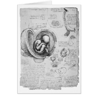 Dibujo del vintage de un feto en el útero 1 tarjeta de felicitación