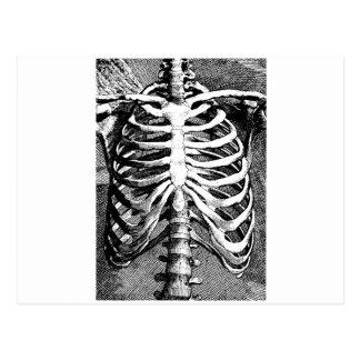 Dibujo del vintage de un ribcage tarjeta postal