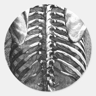 Dibujo del vintage de una espina dorsal y de un pegatinas redondas