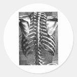 Dibujo del vintage de una espina dorsal y de un etiqueta redonda