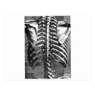 Dibujo del vintage de una espina dorsal y de un postal