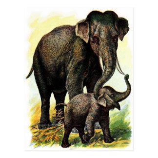 Dibujo del vintage: Elefante de la madre con el Tarjetas Postales