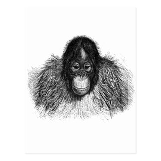 Dibujo elegante del chimpancé del mono del tarjetas postales