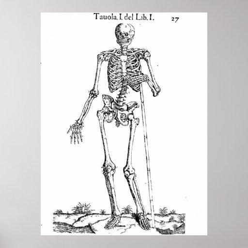 Dibujo esquelético de la anatomía póster