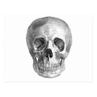 Dibujo frontal de la visión de un cráneo humano postales