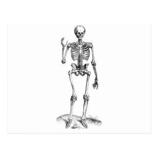 Dibujo frontal del vintage de un esqueleto que postales