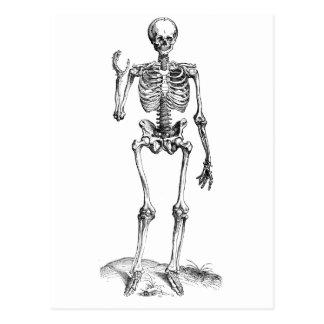 Dibujo frontal del vintage de un esqueleto que postal