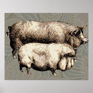 Dibujo guarro del vintage antiguo de los cerdos poster