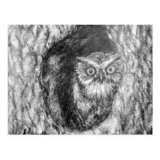 Dibujo negro y blanco del carbón de leña del búho tarjeta postal