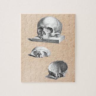 Dibujo ortopédico del cráneo y de los huesos puzzles