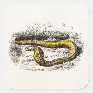 Dibujo retro de las cobras de la serpiente de la pegatina cuadrada