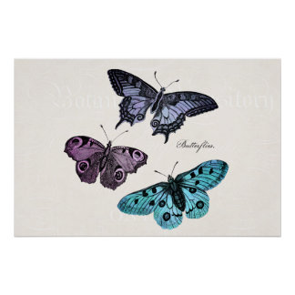 Dibujo rosado púrpura azul de la mariposa del trul posters