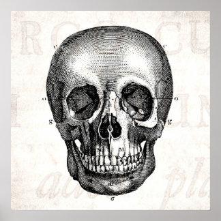 Dibujo viejo anatómico retro del cráneo de los 180 poster