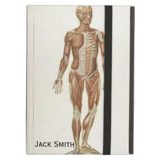 Dibujos anteriores y posteriores de la anatomía de