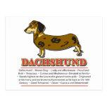 Diccionario del Dachshund Postal