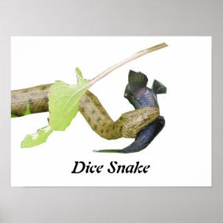 Dice Snake Print