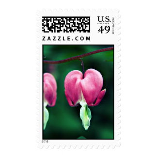 Dicentra - Bleeding Hearts floral Postage stamps
