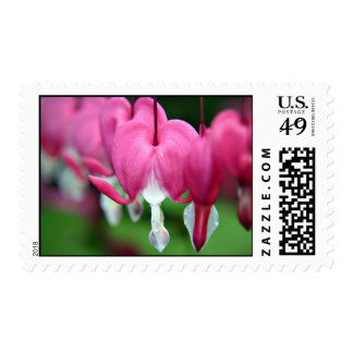 Dicentra Bleeding hearts Stamps