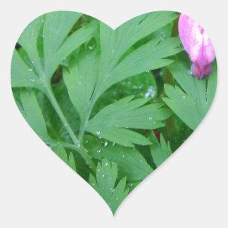 Dicentra formosa Fringe Heart Sticker