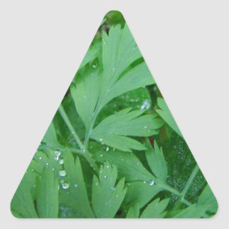 Dicentra formosa Fringe Triangle Sticker