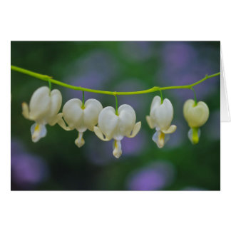 Dicentra Greeting Card