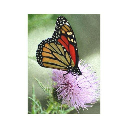 Dicha del monarca impresión en lona estirada