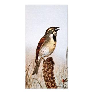 Dickcissel Bird Illustration Card