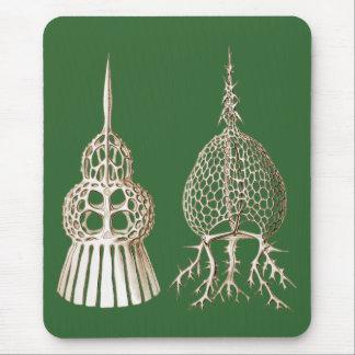 Dictyospyris & Sepalospyris Mouse Pad
