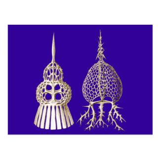 Dictyospyris & Sepalospyris Postcard