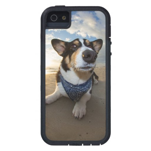 Did Someone Say Cookie? iPhone 5 Covers