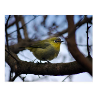 Did you call me little bird postcard