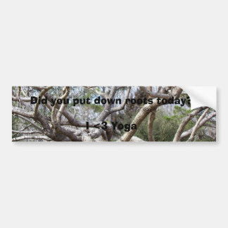 Did you put down roots today? bumper sticker