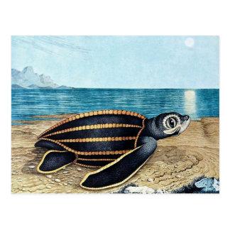 Die Seeschildkröte or The Sea Turtle (1867) Postcard