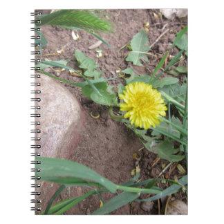 Diente de león 3 del desierto spiral notebook