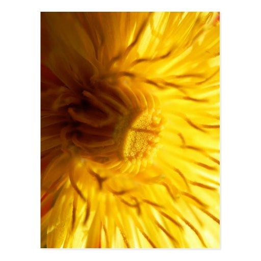 Diente de león amarillo intrépido tarjetas postales