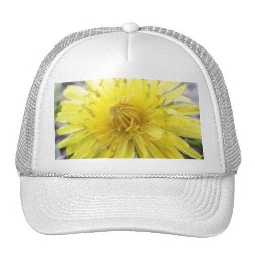 Diente de león amarillo soleado gorras de camionero
