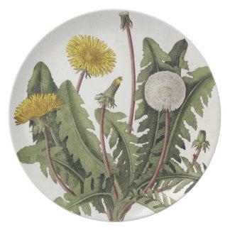 Diente de león (grabado del color) plato para fiesta