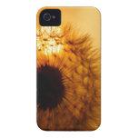Diente de león y puesta del sol Case-Mate iPhone 4 fundas