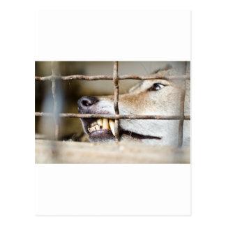 Dientes del lobo tarjeta postal