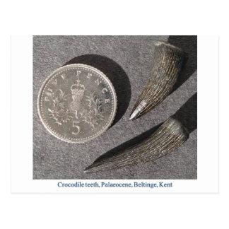 Dientes fósiles del cocodrilo tarjetas postales
