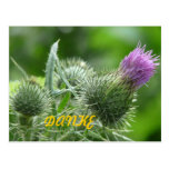 Diestel of purple postcard thanks